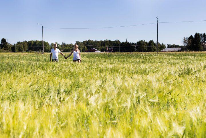 Luomupossutilan viljelijät yhdessä pellolla Munsalassa