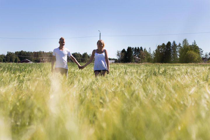 Grisfarmarna vid Skogjsö Gård på en åker