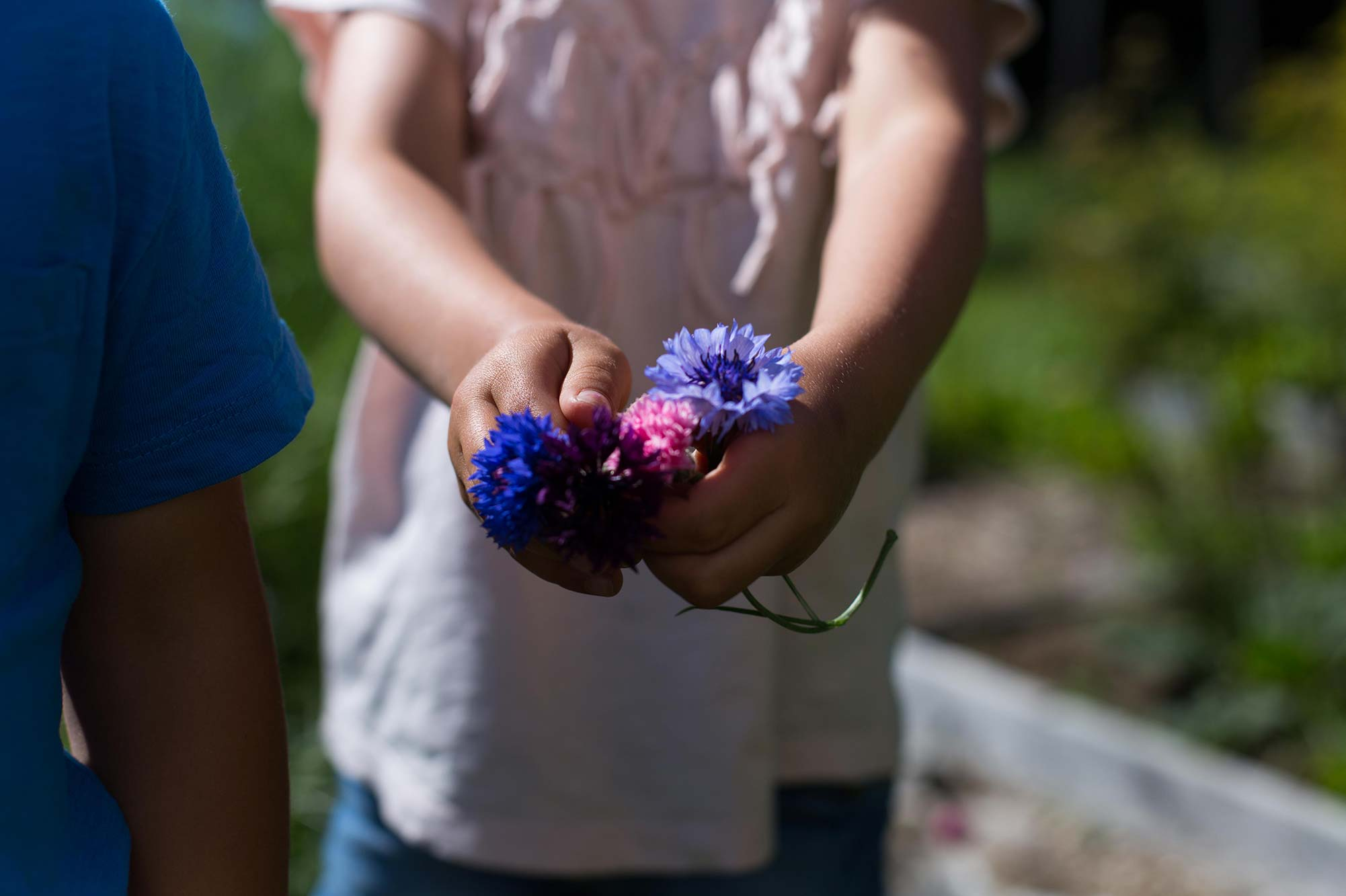 Skogsjö Gårdin tilalla kukkia tytön kädessä